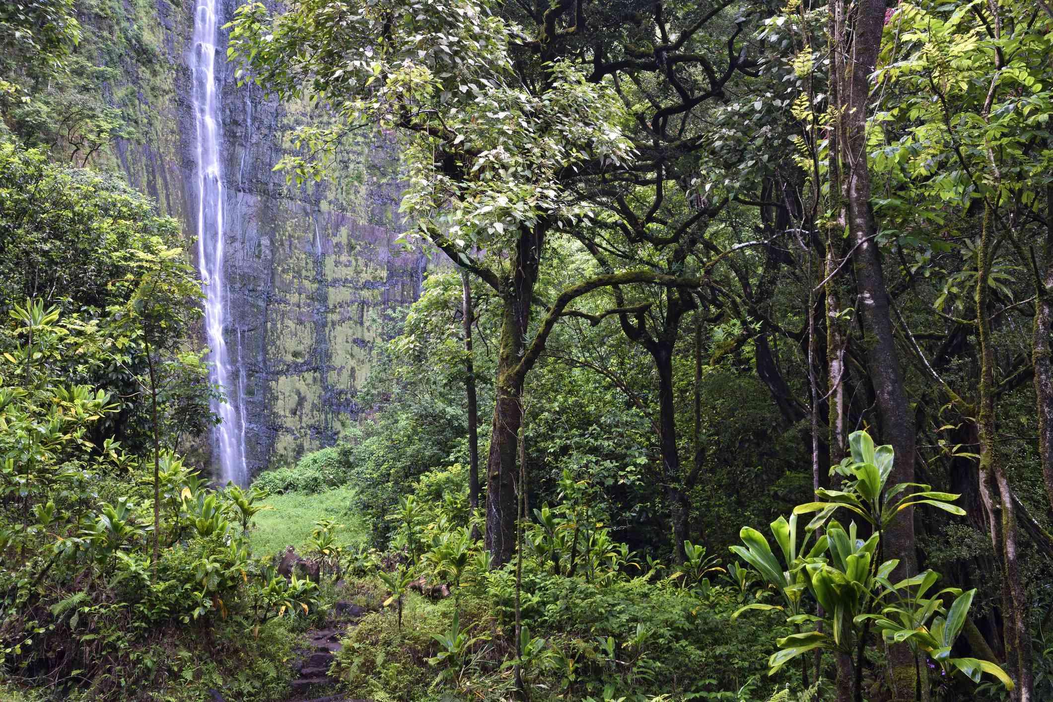 Waimoku Falls on the Pipiwai Trail, Maui, Hawaii