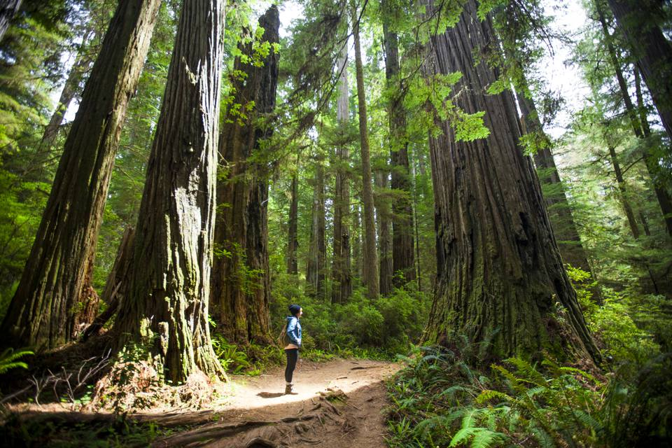 Un excursionista en el Parque Nacional Redwood de California