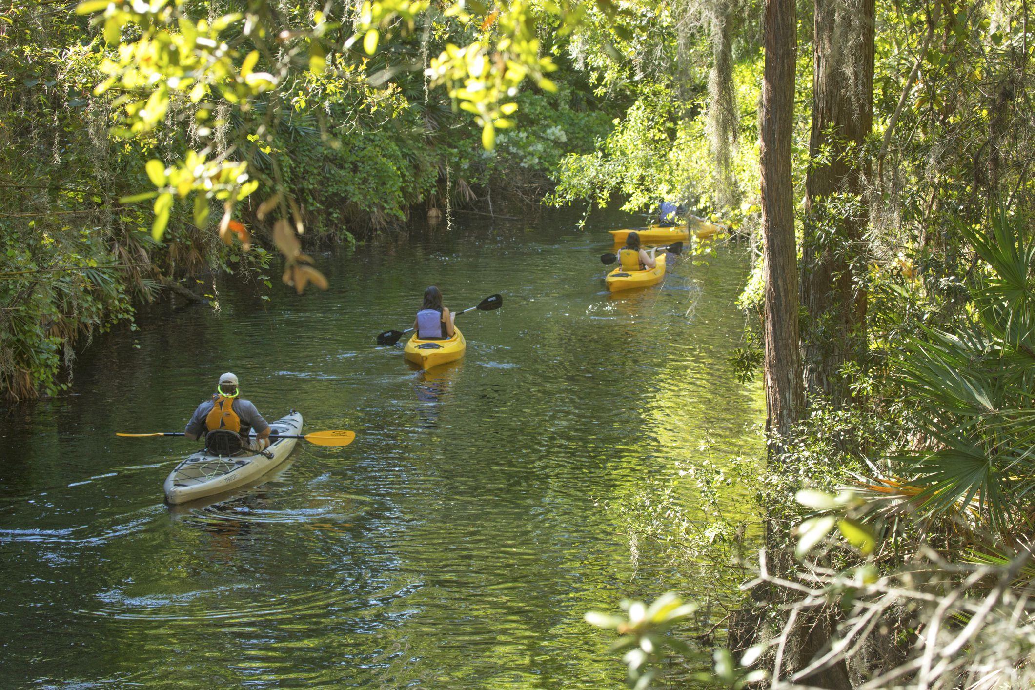 kayakers on shingle creek in florida