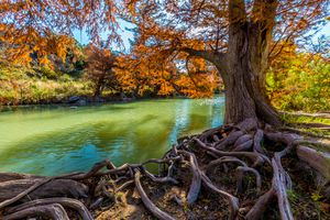 Fall Foliage on the Guadalupe River at Guadalupe State Park, Texas