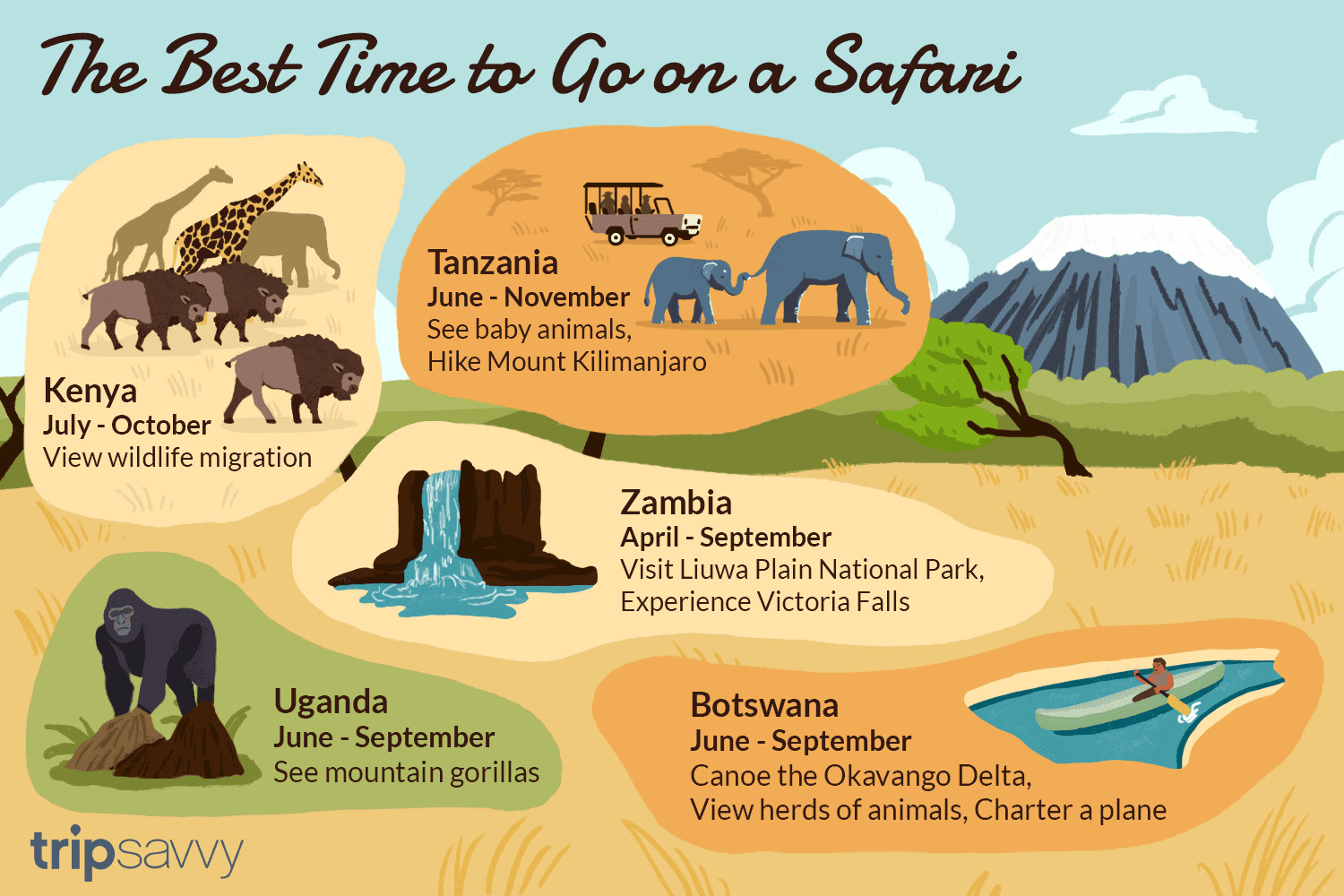 The Best Time to Go on Safari
