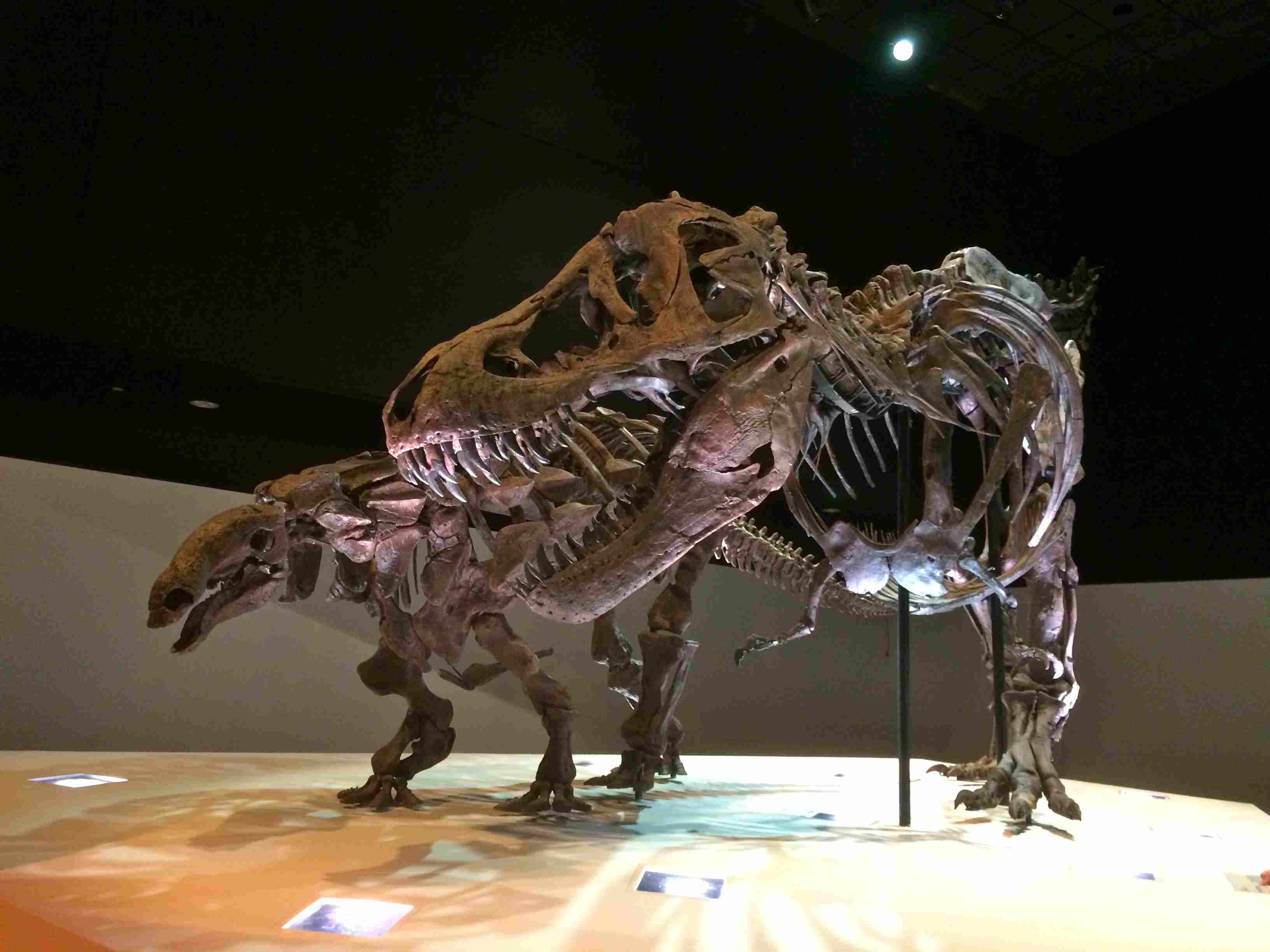 10 Museums in Houston You Have to Visit