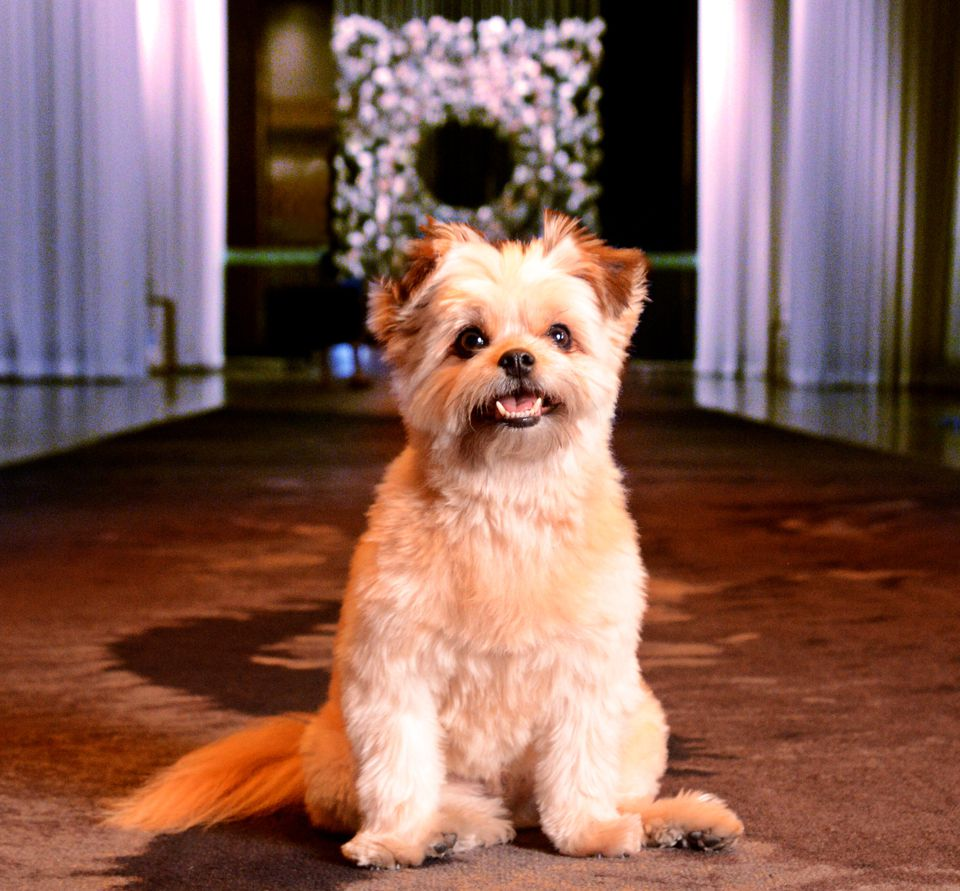 Cute dog at Delano Las Vegas Hotel