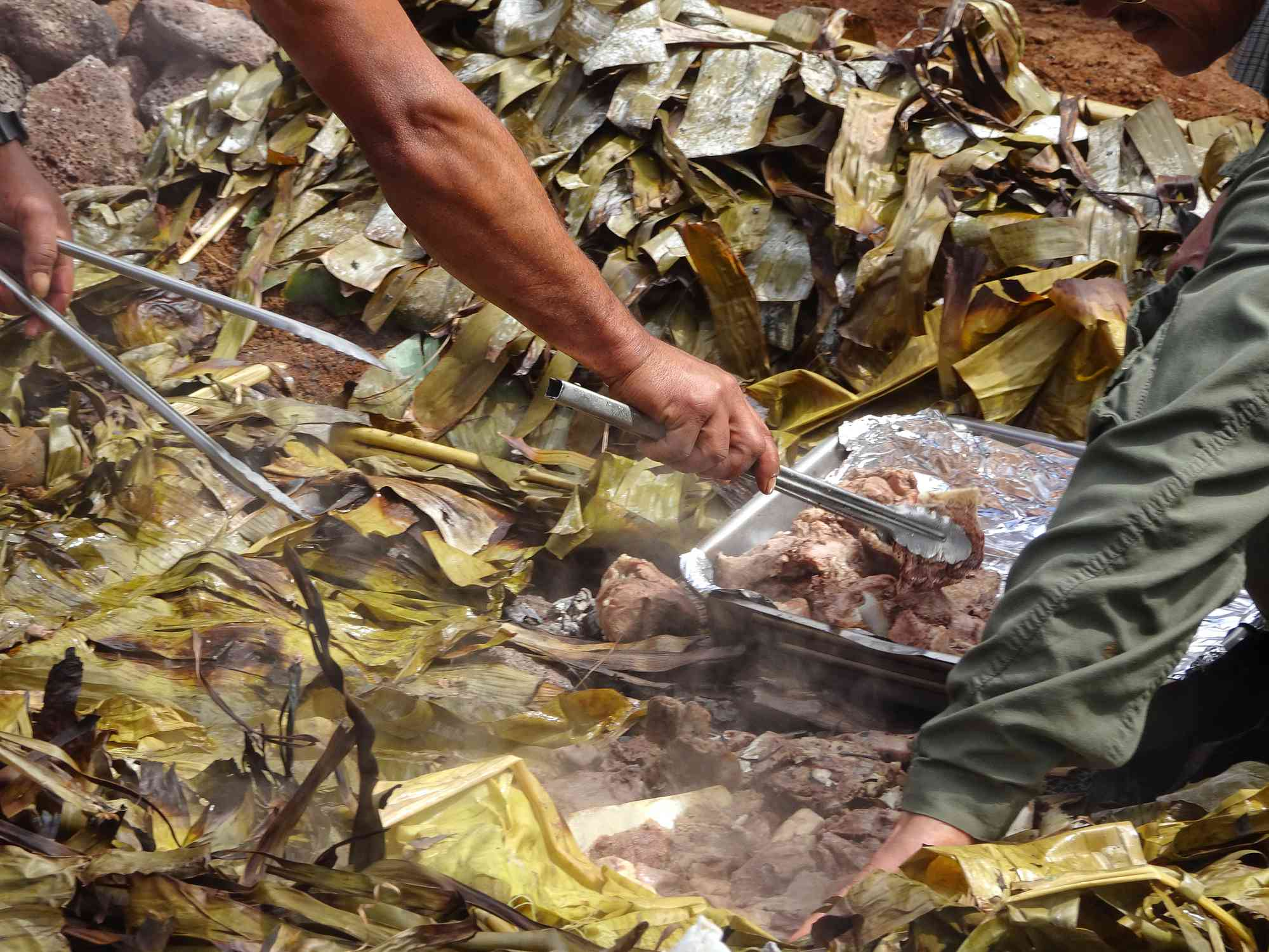 hands picking up meat from a tray in a pit of leaves