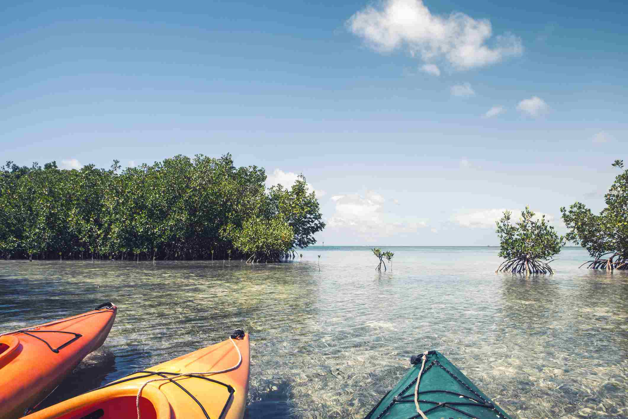 Kayaks in Mangrove
