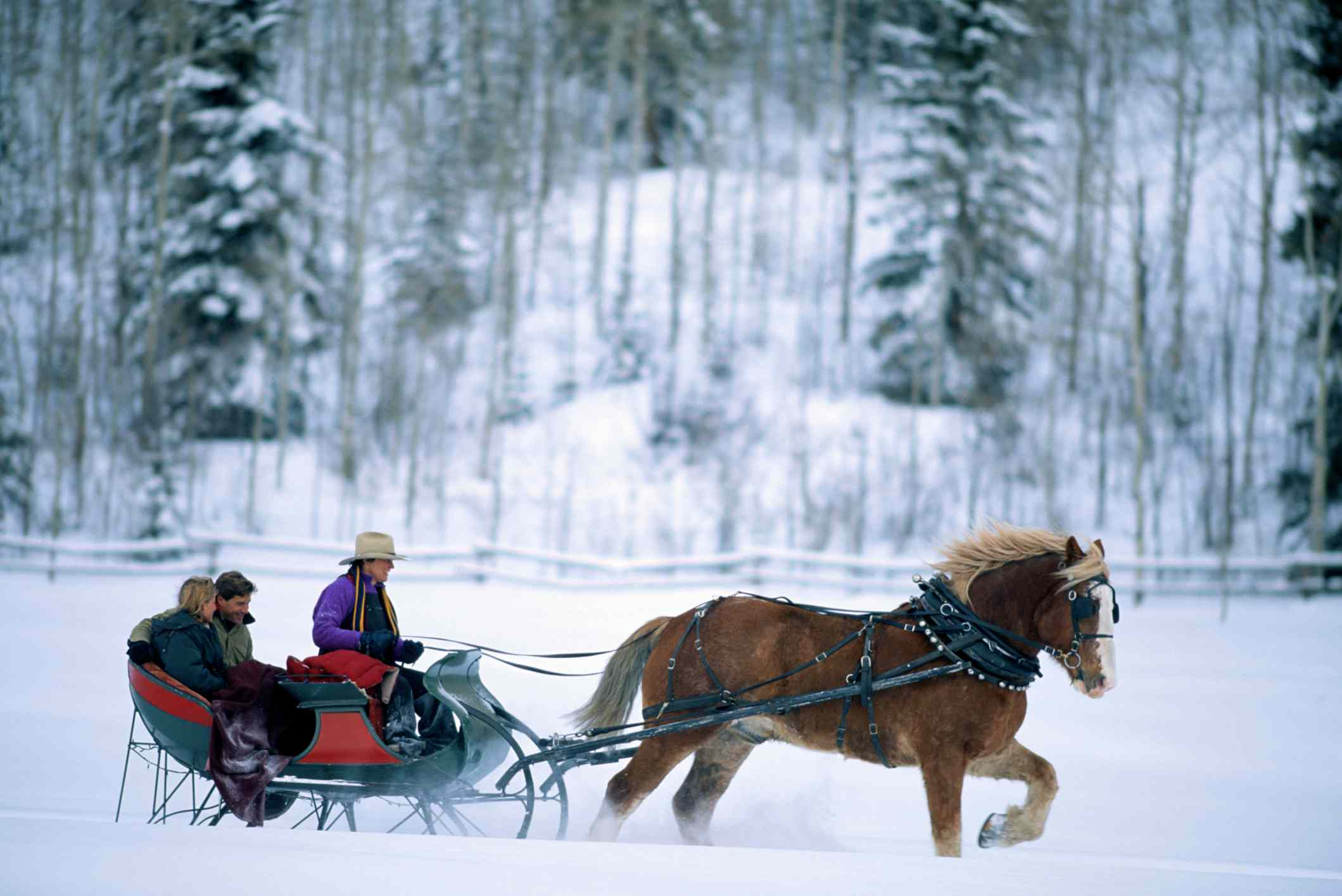 Family taking a horse-drawn sleigh ride