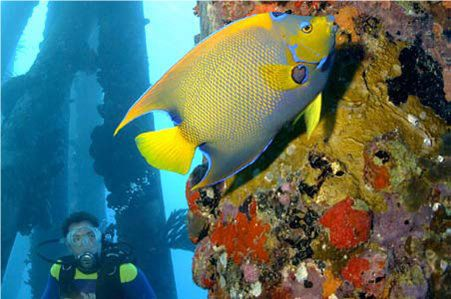 Diver stalks a tropical fish in the Bonaire Marine Park