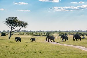 Line of elephants walking at Hwange National Park