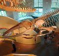 North Carolina Museum of Natural Sciences - Raleigh NC; Photo Credit: NC Division of Tourism / Bill