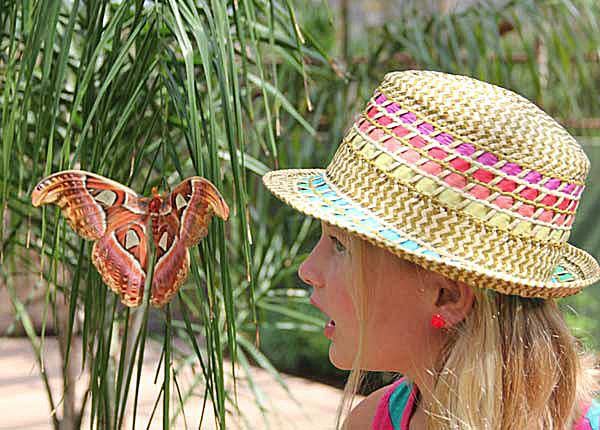 A young guest is amazed at the size of the Atlas Moth at Butterfly Wonderland