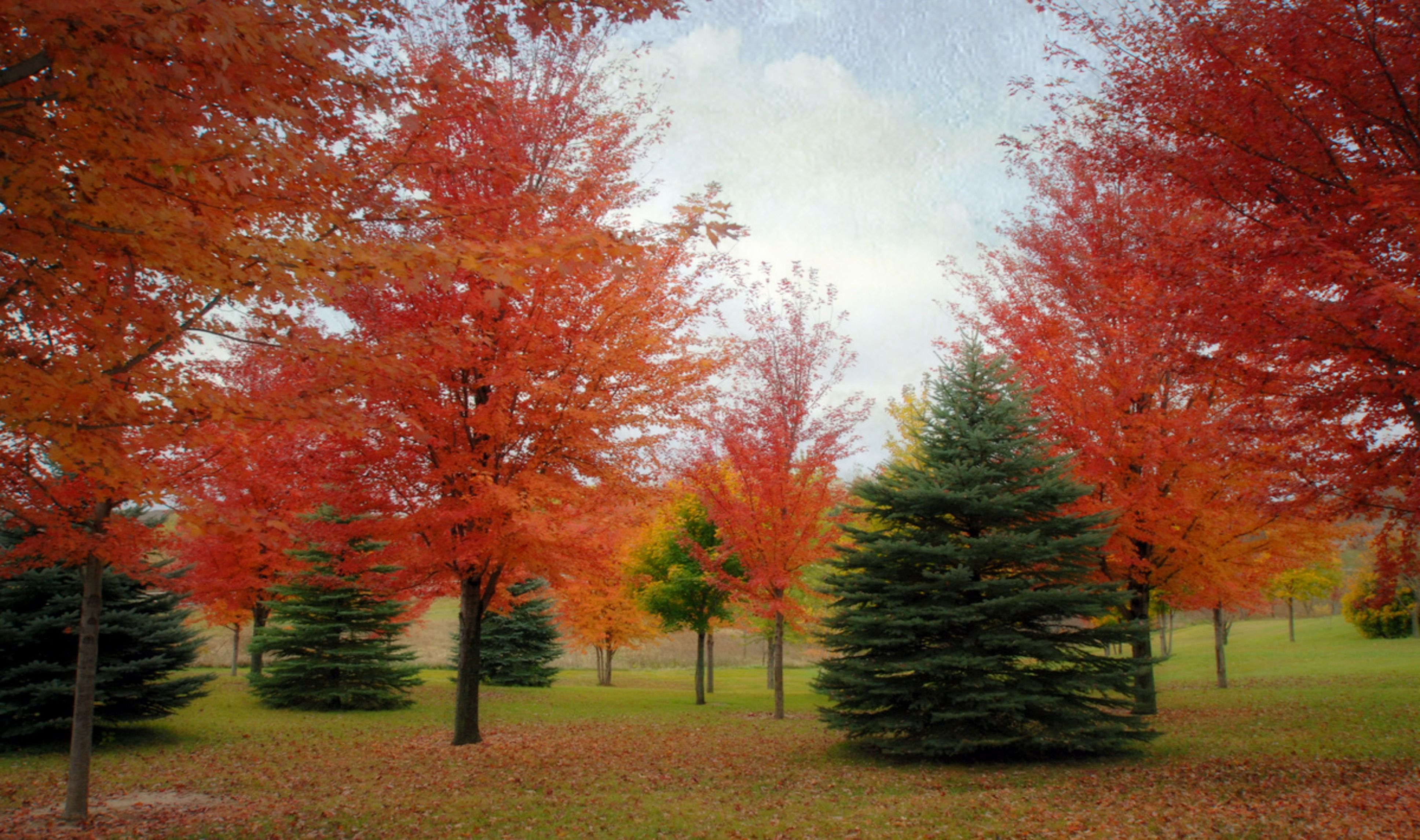 Fall trees with reds and oranges