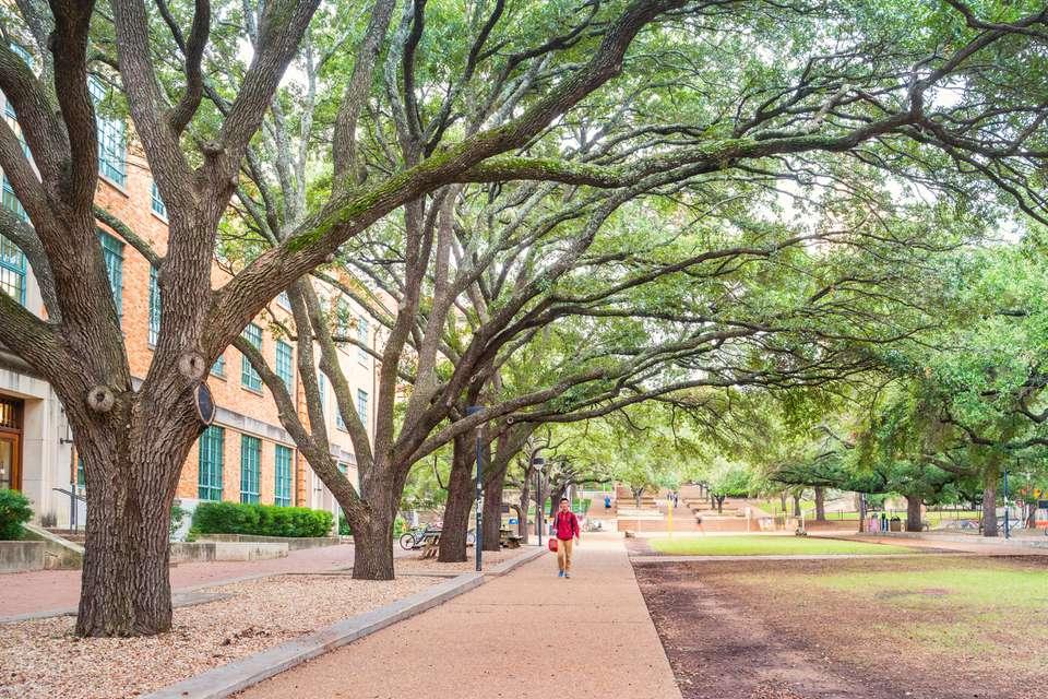 Treelined Walkway at University of Texas at Austin USA