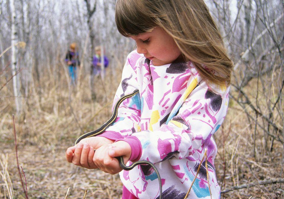 Narcisse Snake Dens in Manitoba, Canada