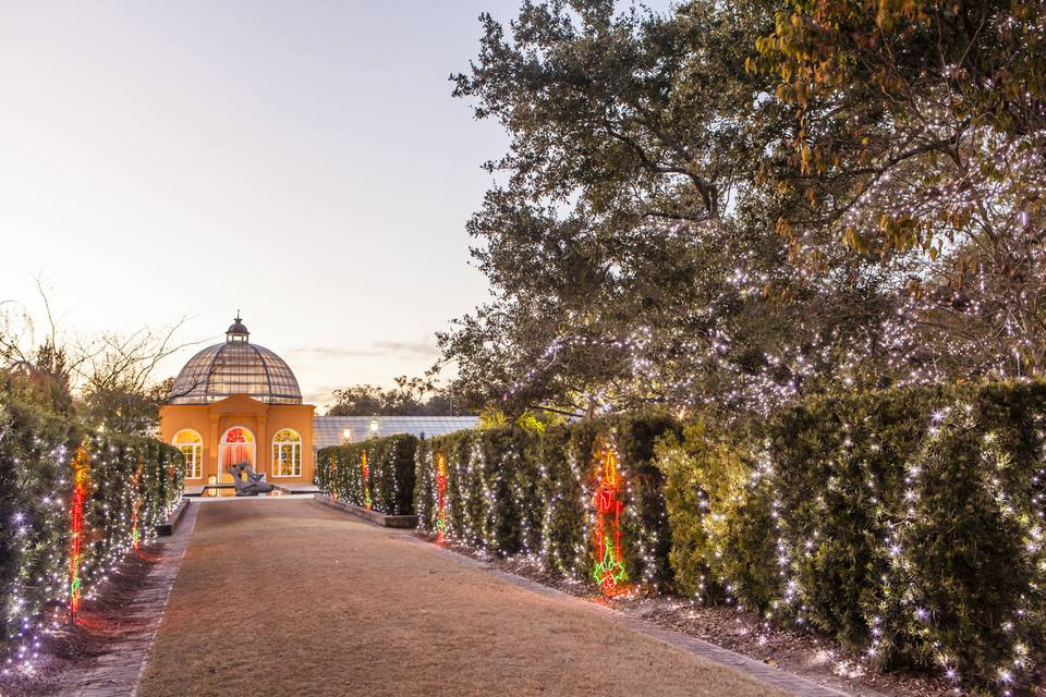 Christmas Lights at New Orleans Botanical Gardens.