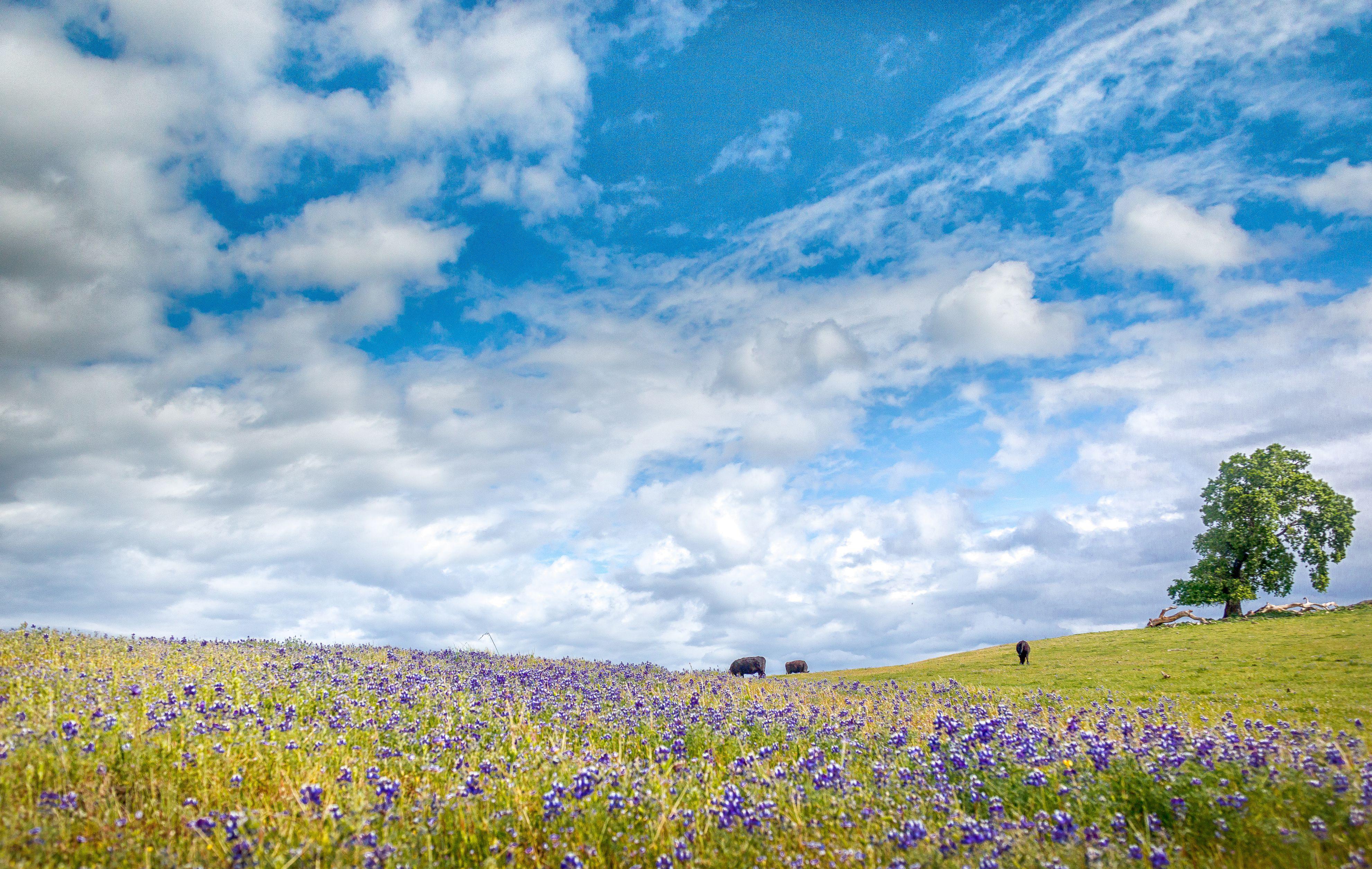 Table Mountain Landscape