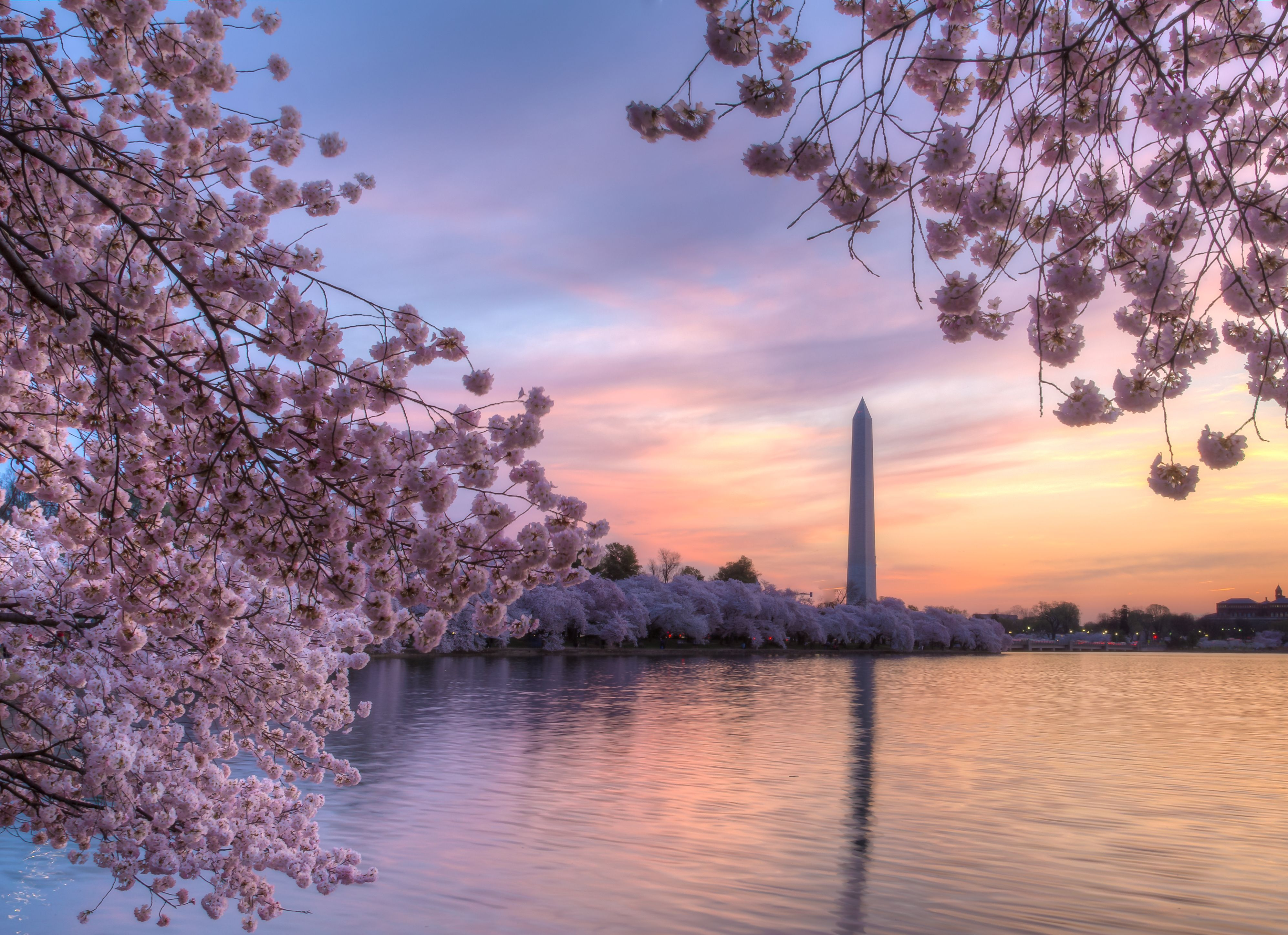 cherry blossom festival - HD2048×1536