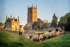 sheep in front of cathedral