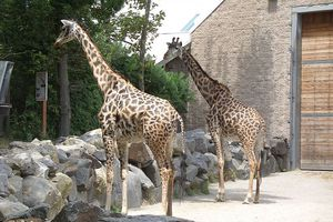Feed giraffes at the Roger Williams Park Zoo