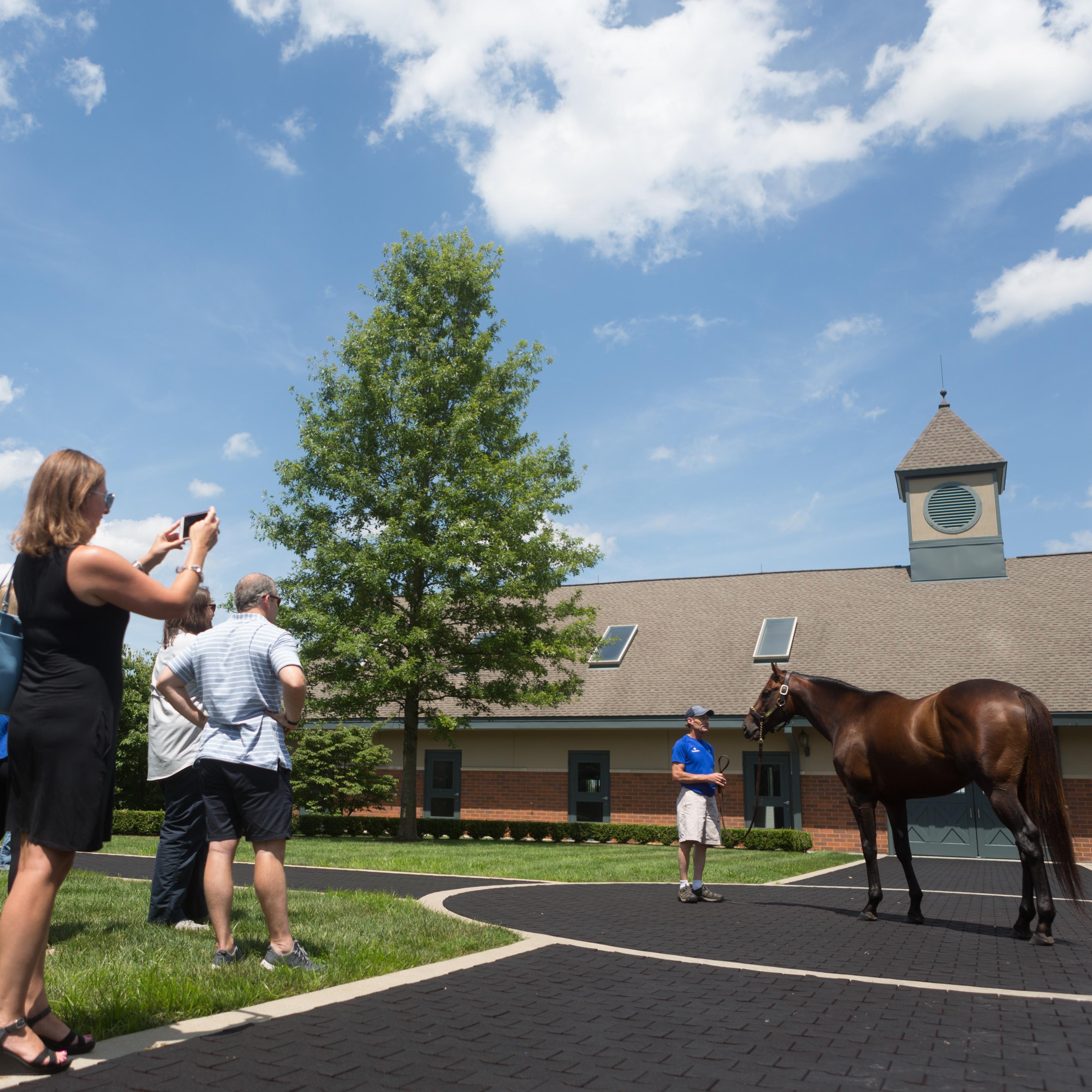 Horse Tour at Keeneland National Historic Landmark