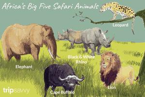 Africa's safari animals