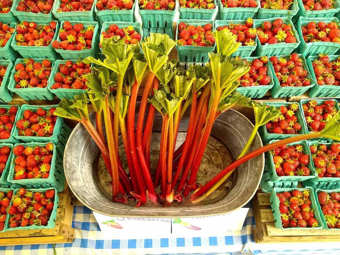 Rhubarb and strawberries at the Columbia Heights Farmers Market