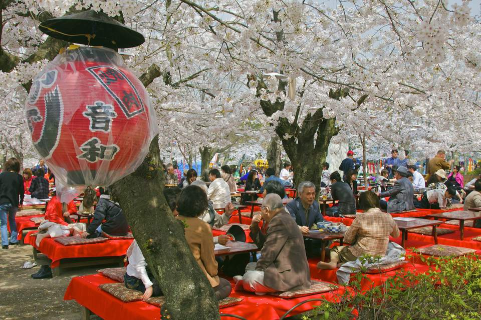 People at a cherry blossom viewing party (hanami) on grounds of Yasaka shrine in Japan.