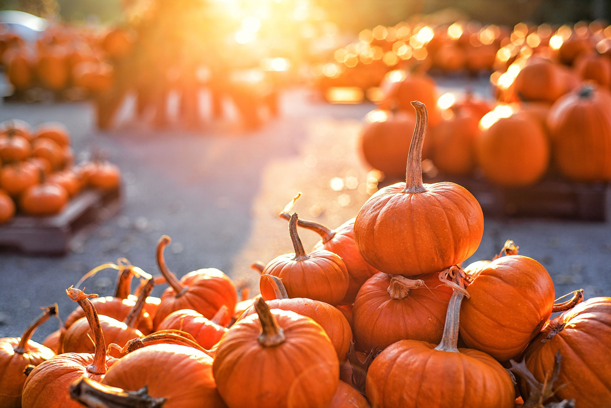 Pumpkin Patches in Oklahoma City