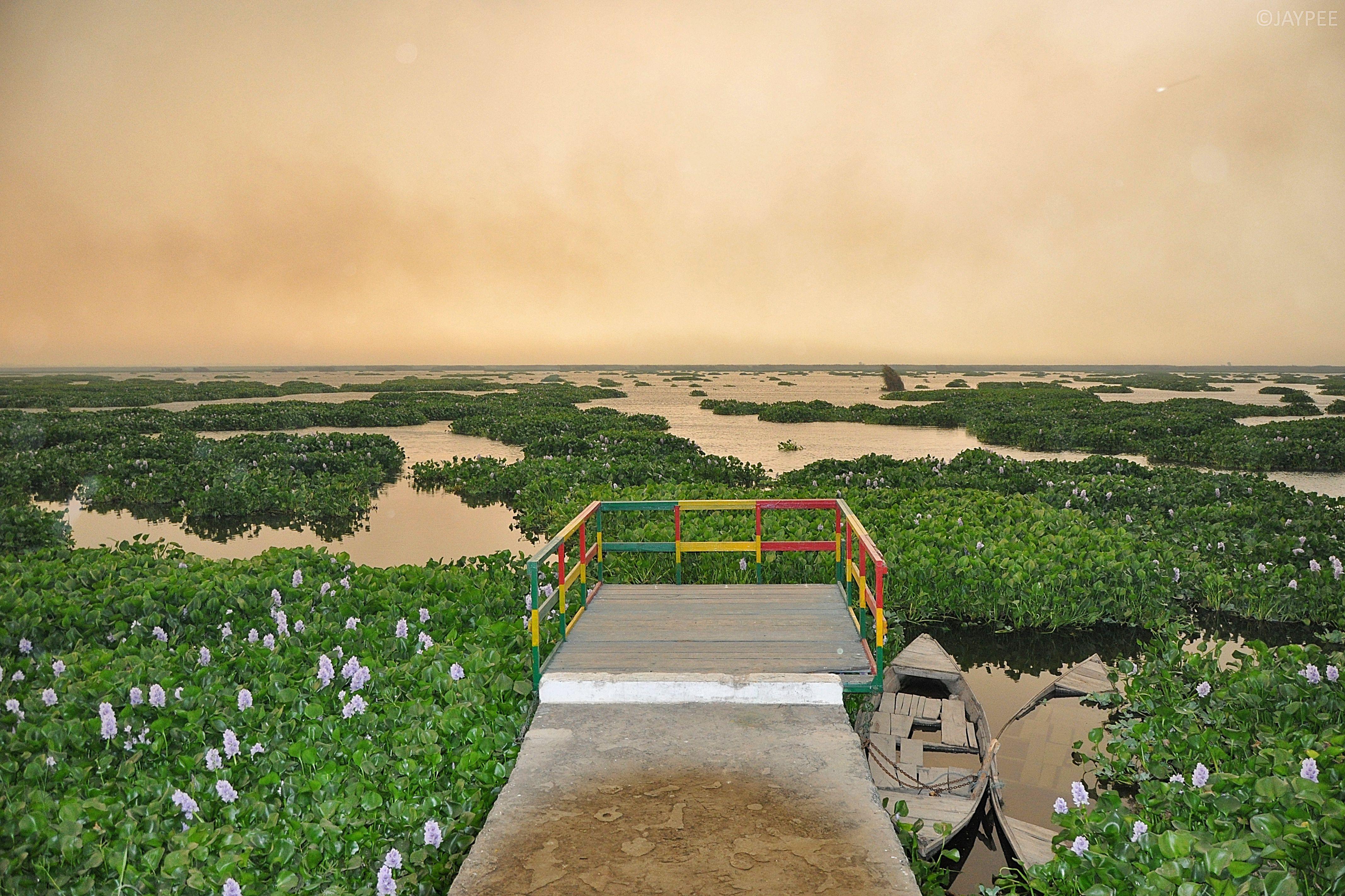 Harike Wetlands