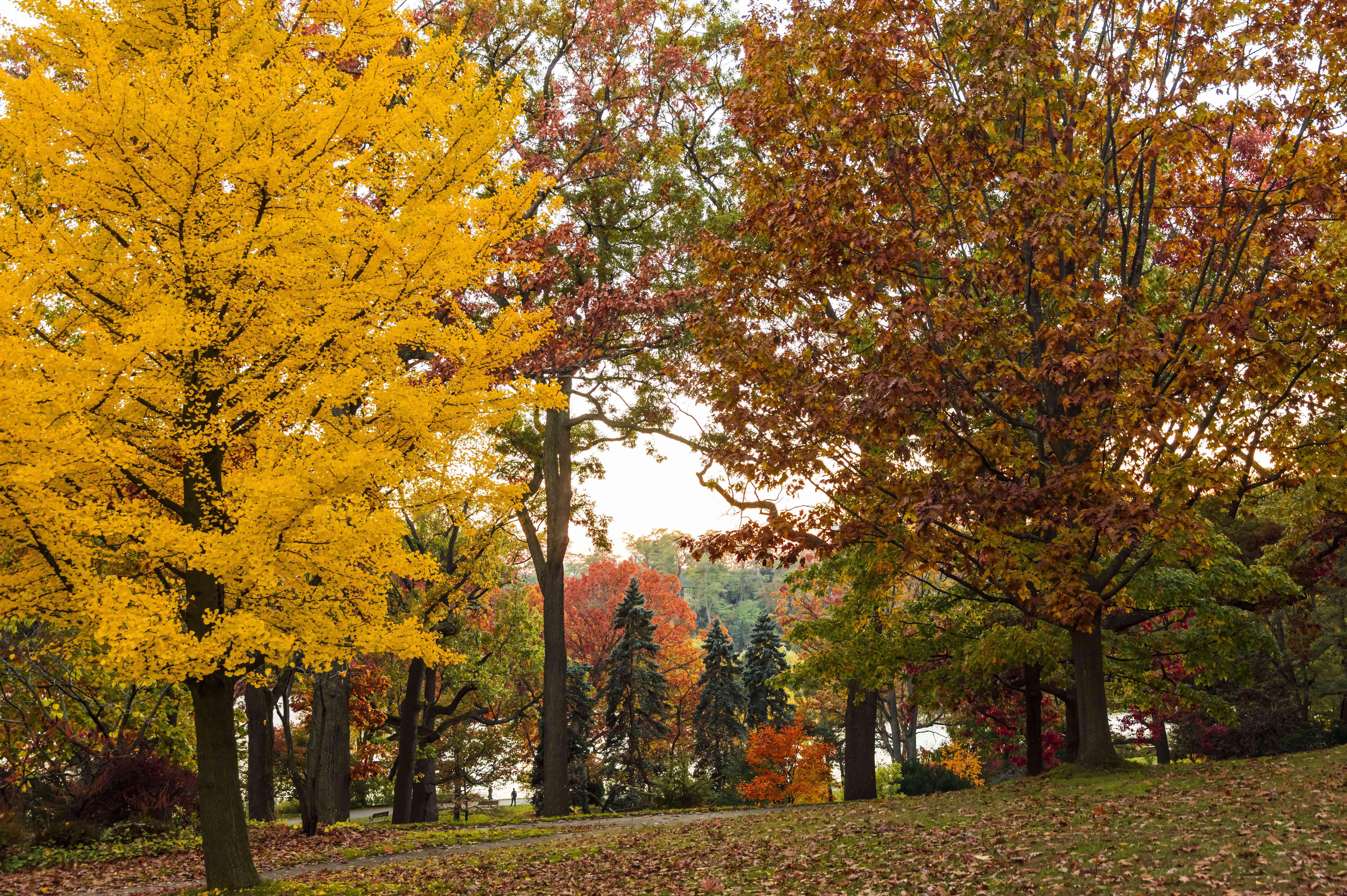 Fall foliage in High Park,Toronto