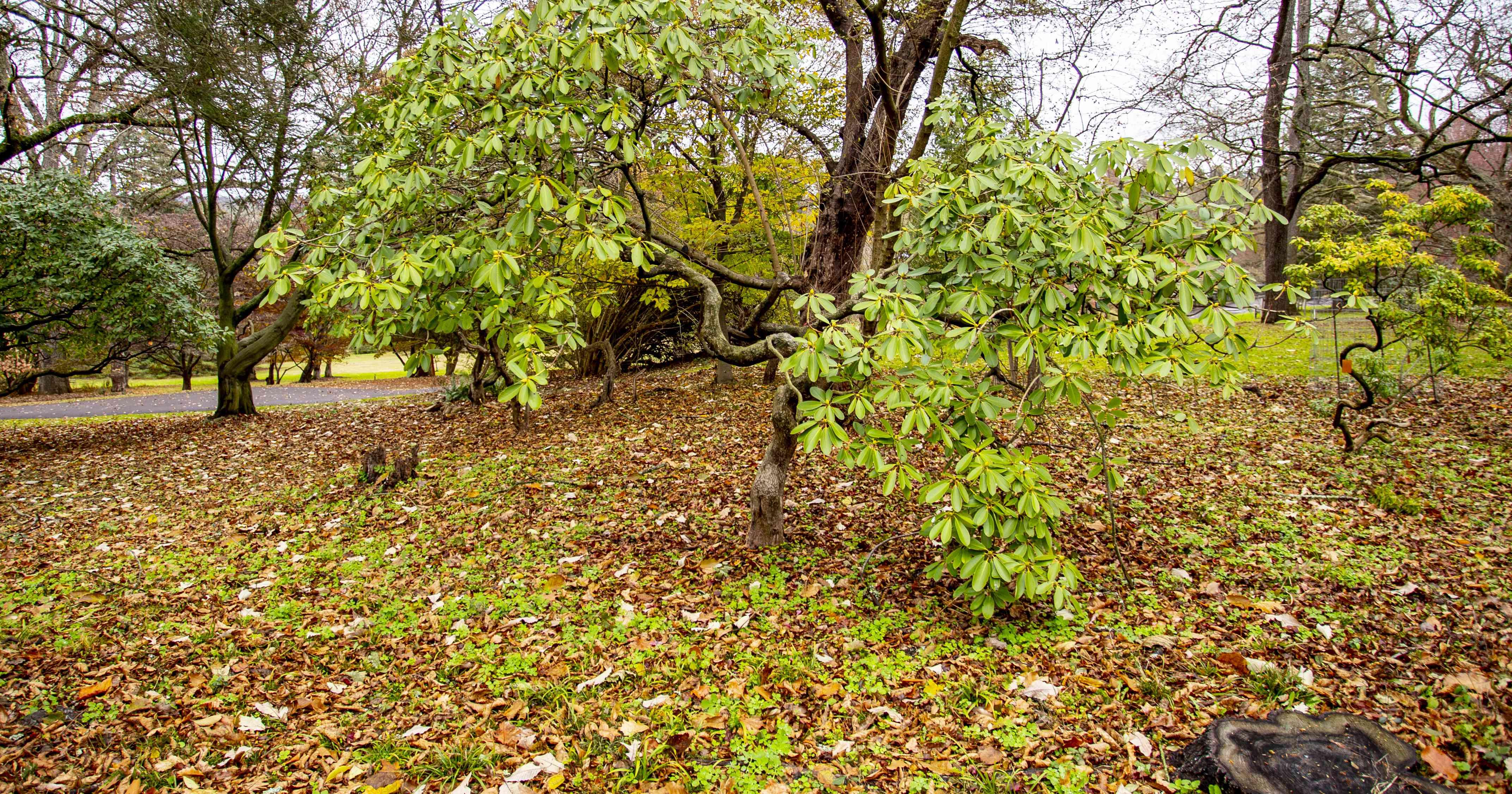 Morris Arboretum of the University of Pennsylvania