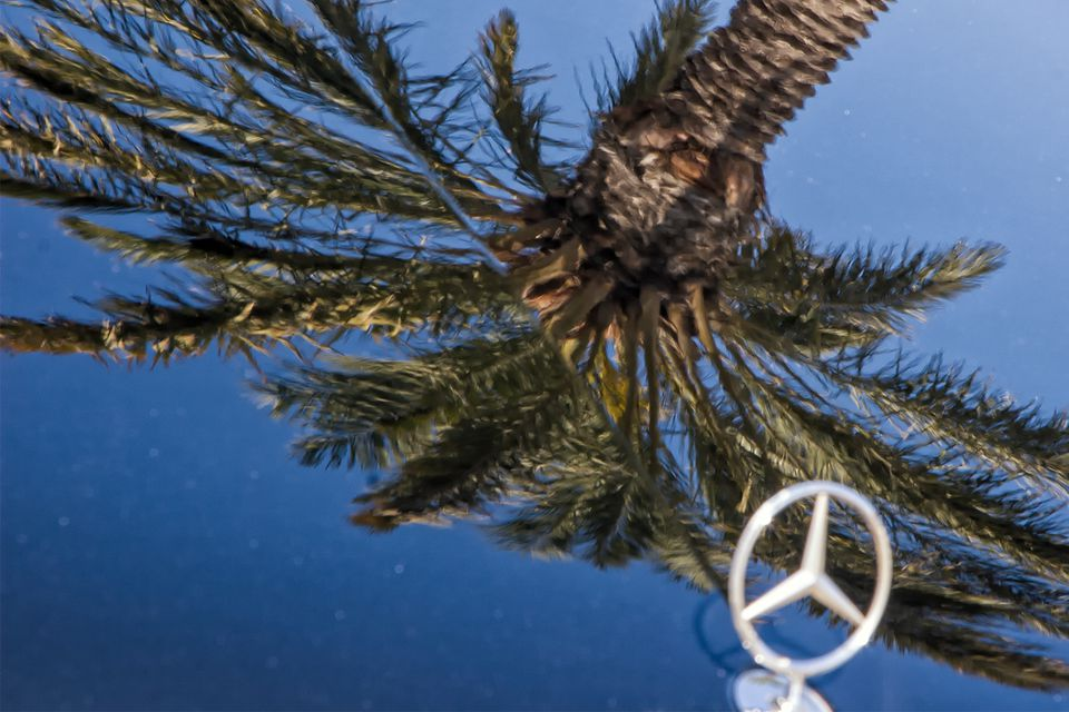 Beverly Hills Palm