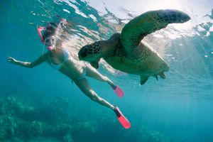 swimming with sea turtle