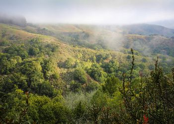 View on Oakland park hiking path in forest fog