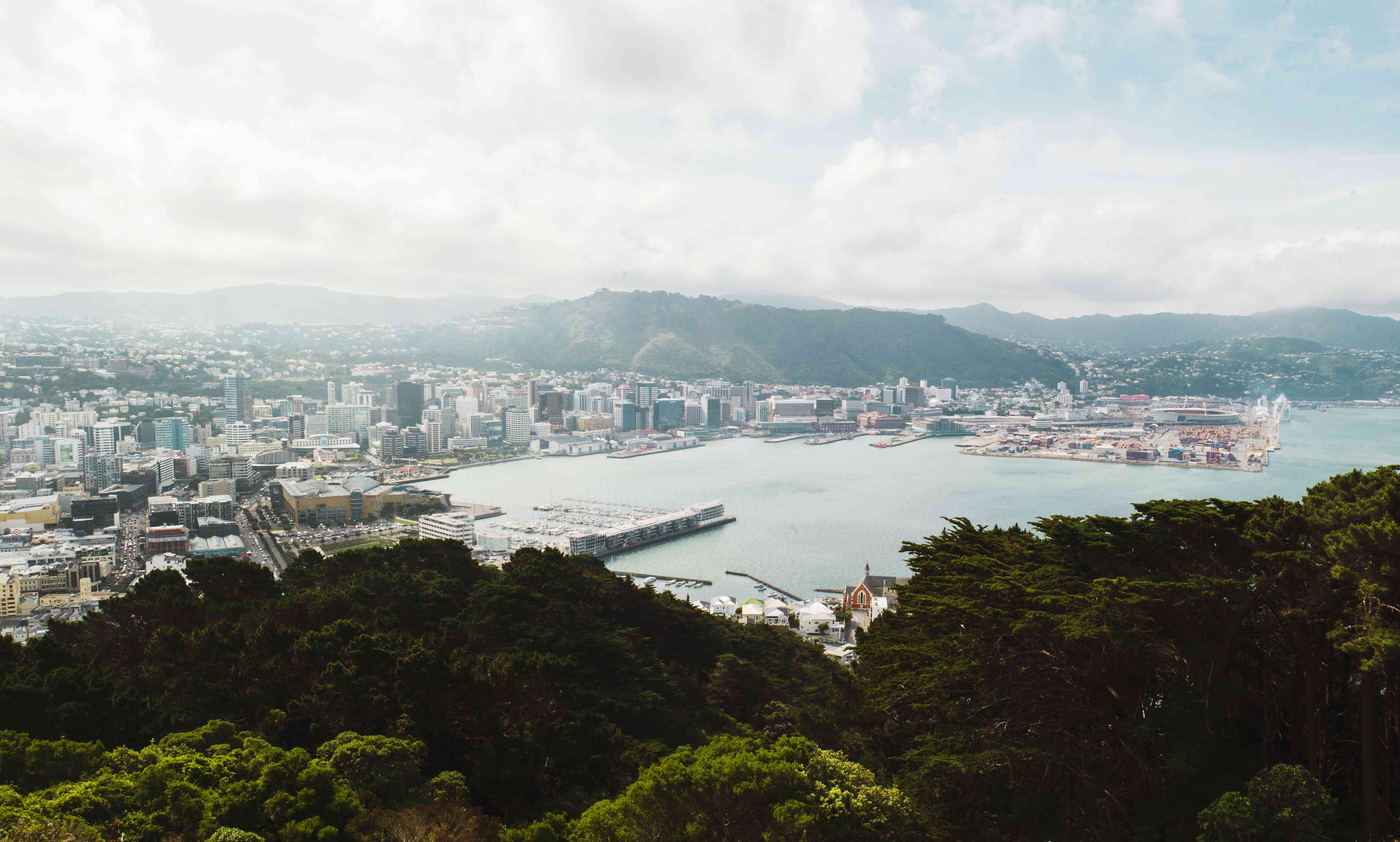 View of Wellington from Mt Victoria Lookout