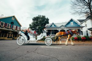 Charlotte horse and carriage