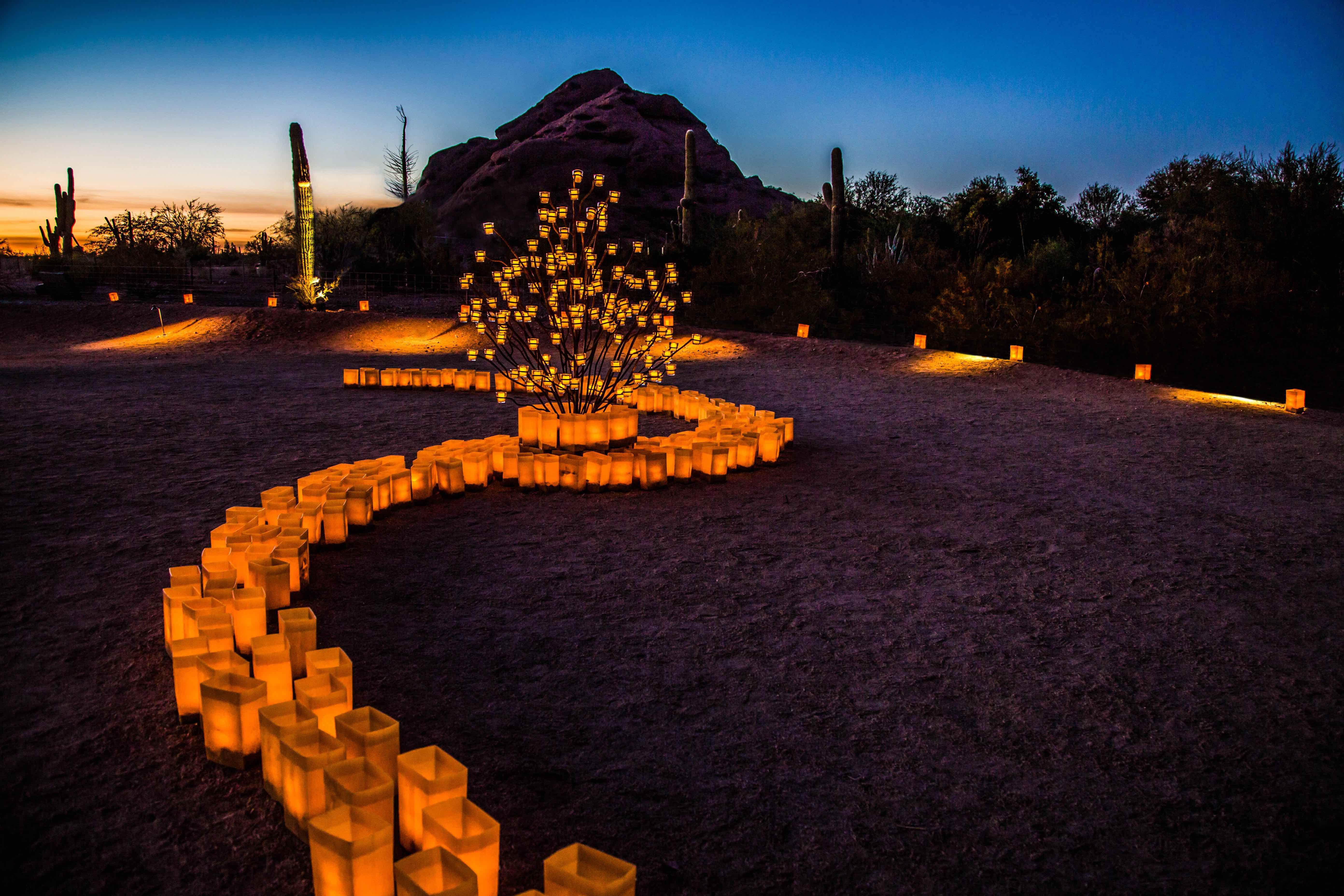 Luminaries at the Desert Botanical Garden