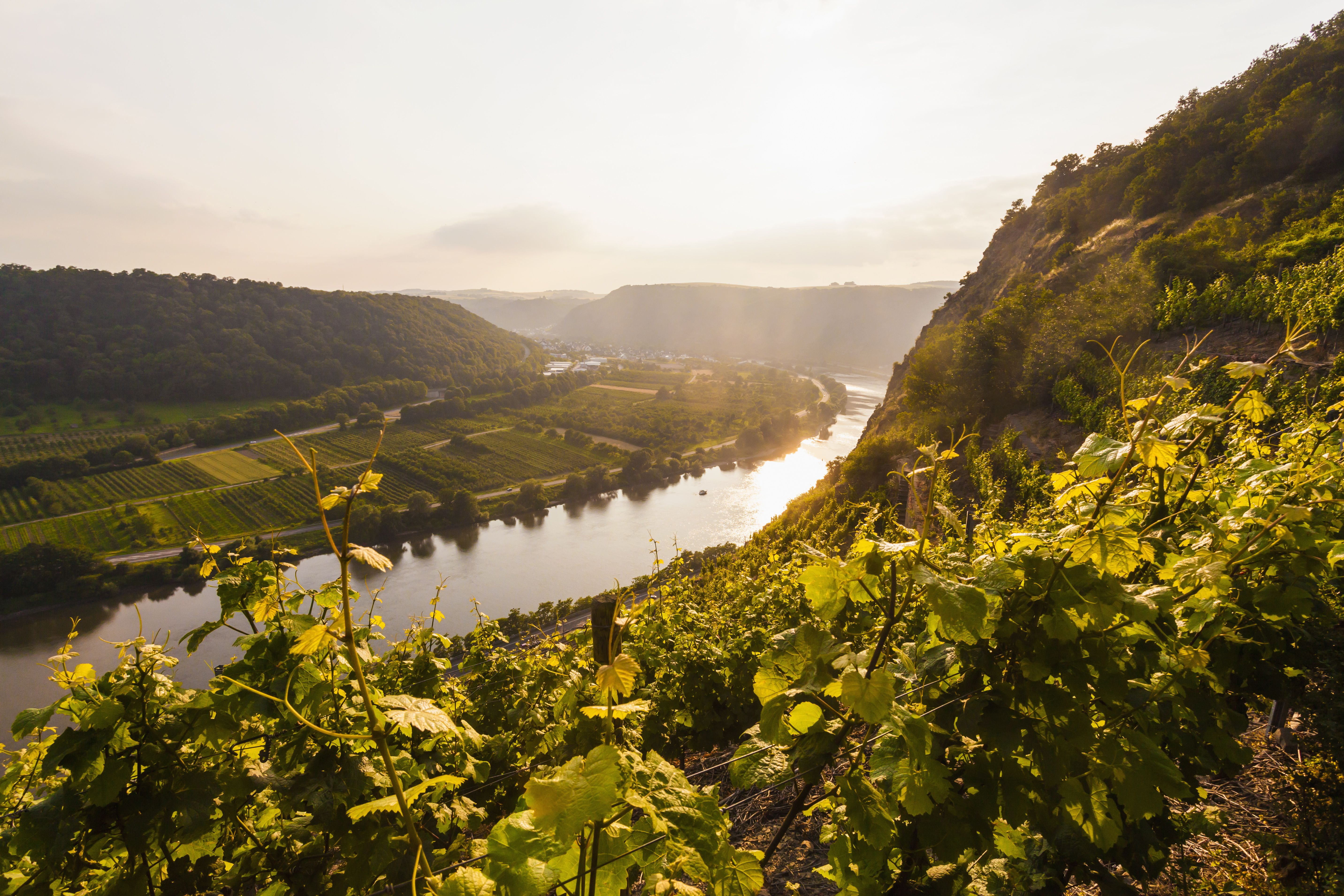 Germany, Rhine-Palatinate, View of Moselle Valley near Dieblich, vineyards at moselle river