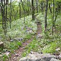 Wildflowers bordering the A.T. - Photo: Kathryn Case, Appalachian Trail Conservancy