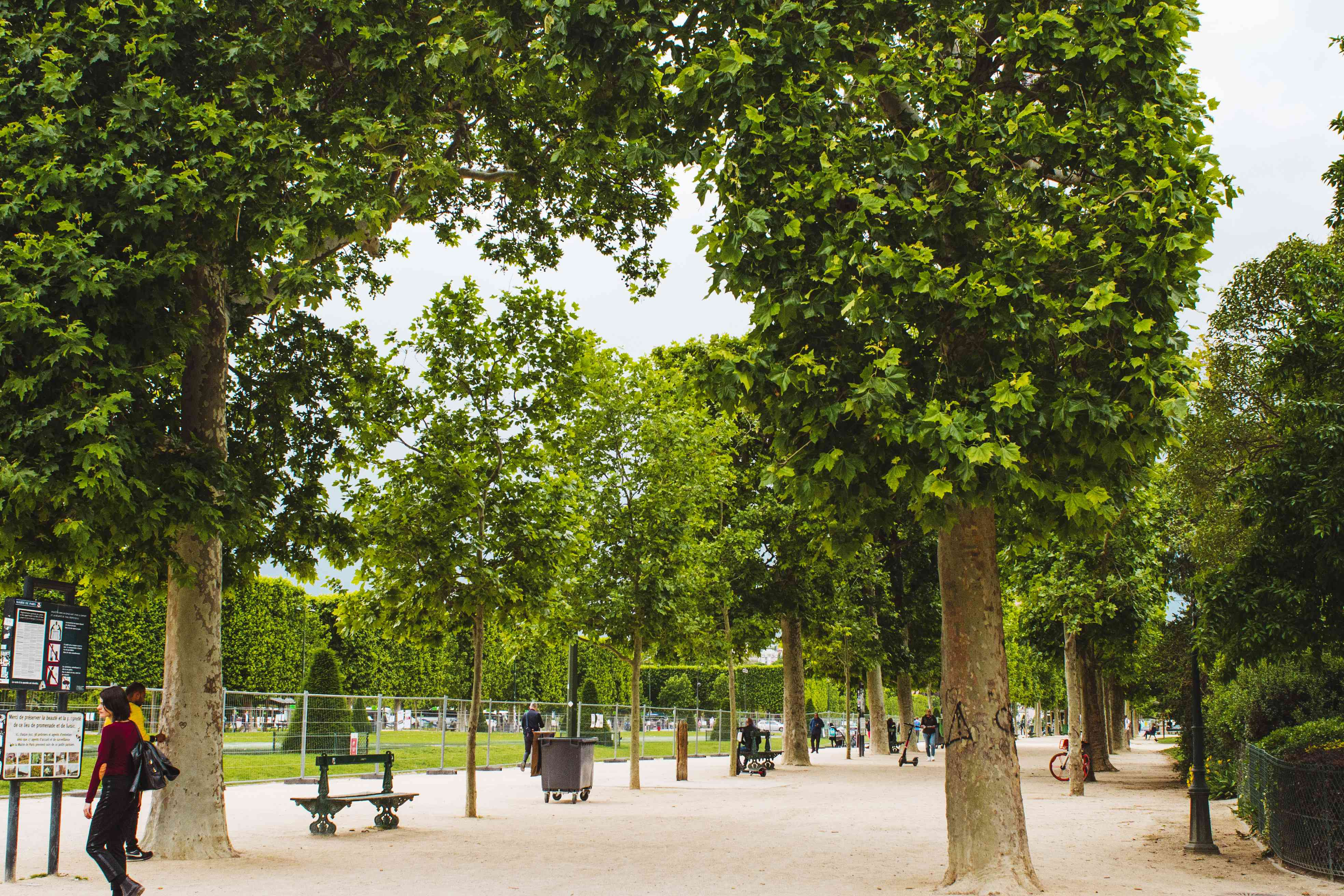 Benches in Champ de Mars