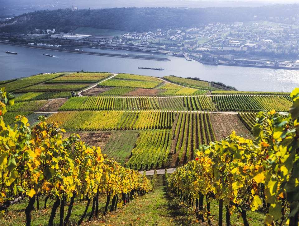 Vineyards of Rhine Valley