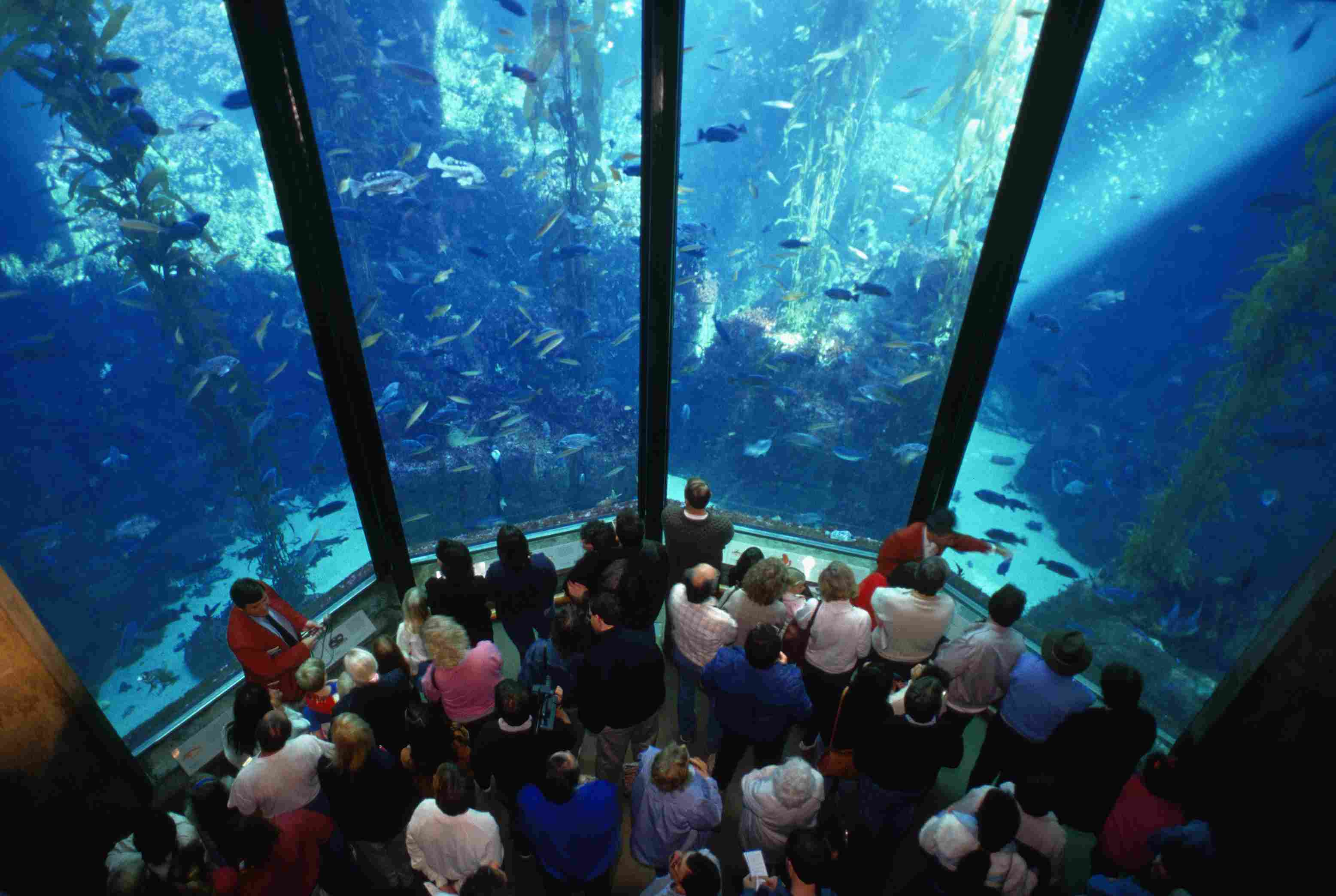 Visitors at the Monterey Bay Aquarium