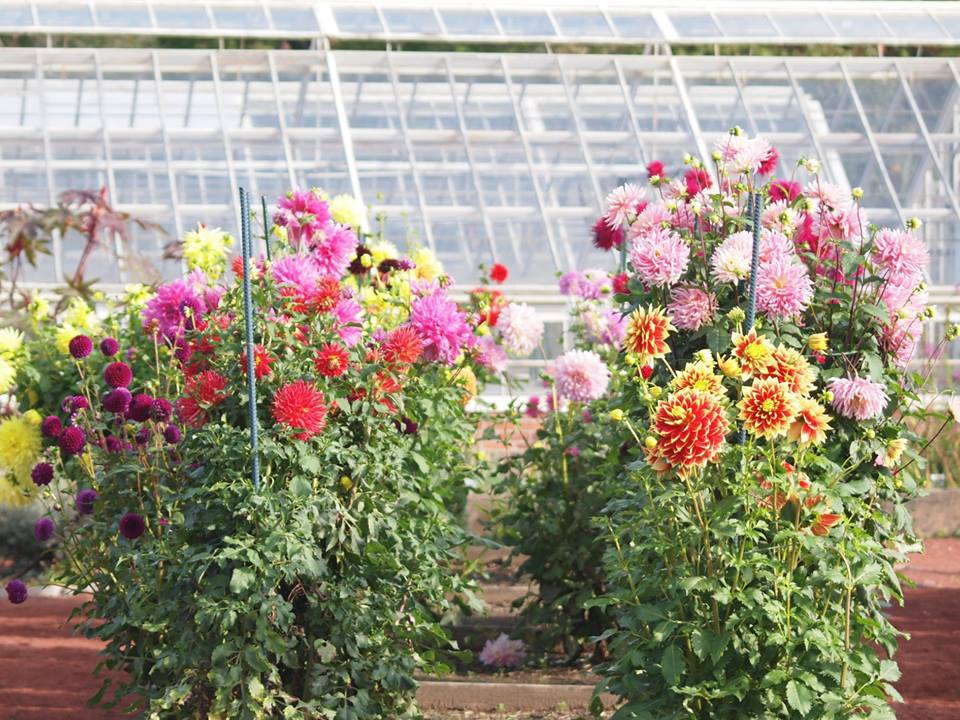 Flowers at the Elizabeth Park Conservatory