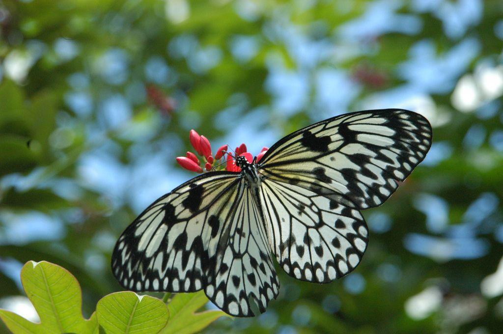 Casa Butteryfly en Faust Park