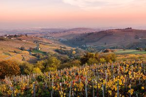 Autumn vineyards in Burgundy, France show gorgeous fall colors.