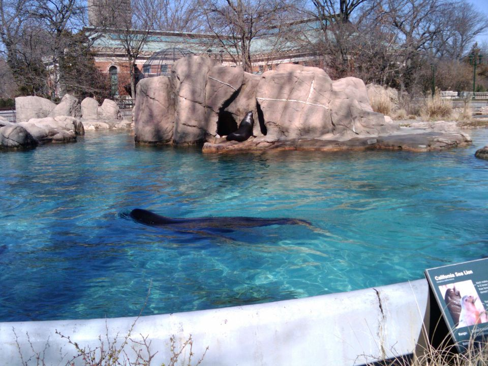 The sea lions at the Bronx Zoo