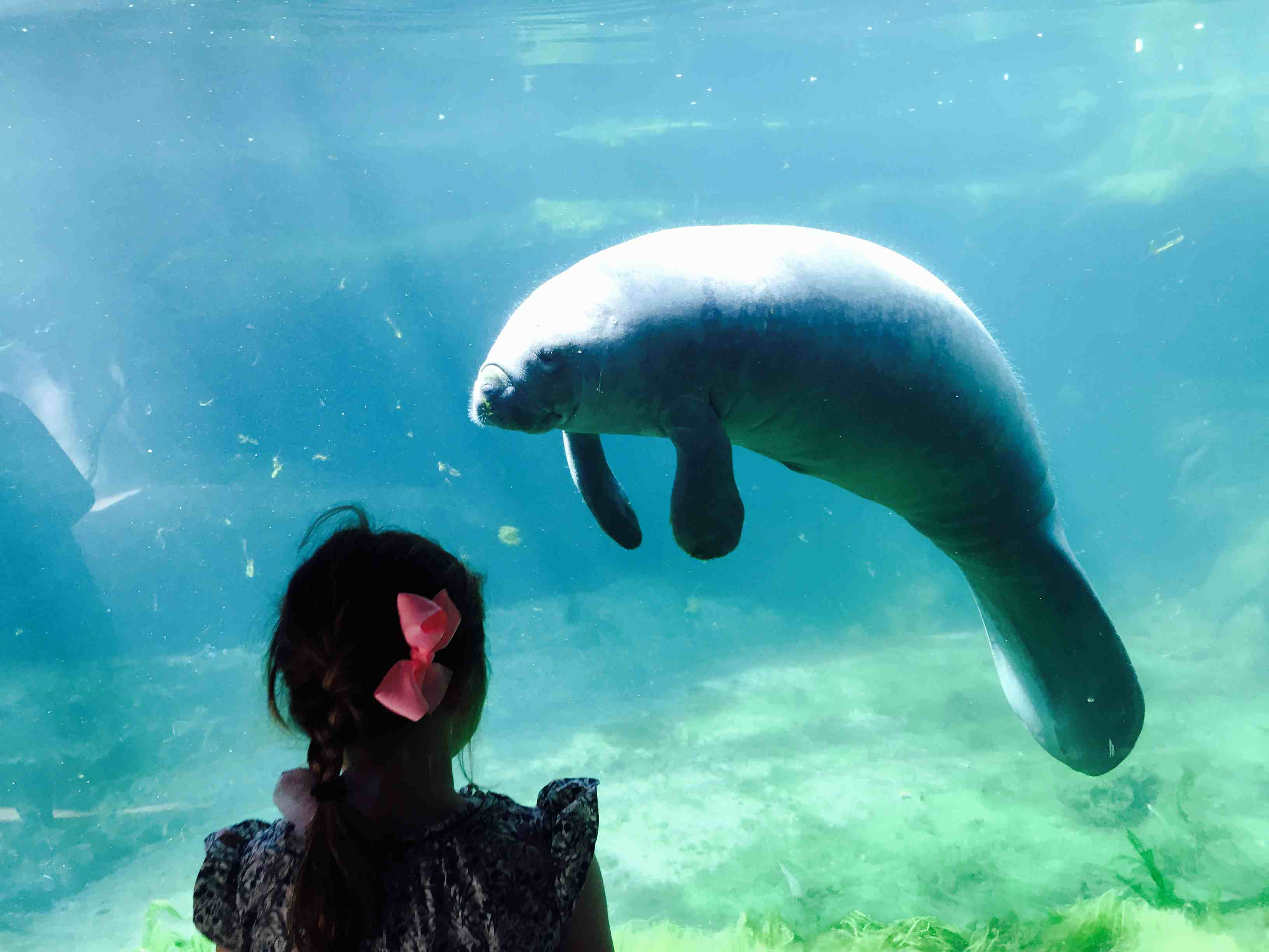 A young girl looking at a dugong behind a glass in an aquarium in Paris, France