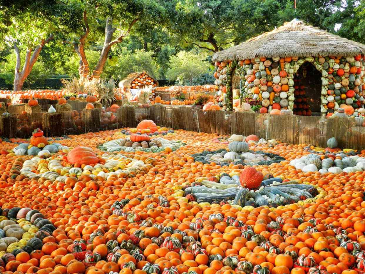 Autumn at the Arboretum