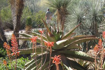everything you need to know about desert botanical garden in phoenix - Desert Botanical Garden Phoenix