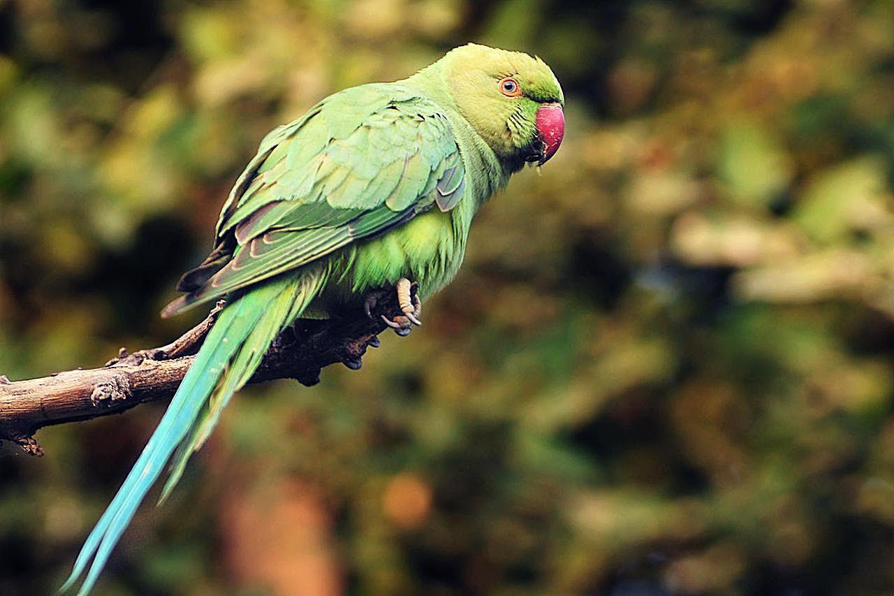 Попугай виды картинки