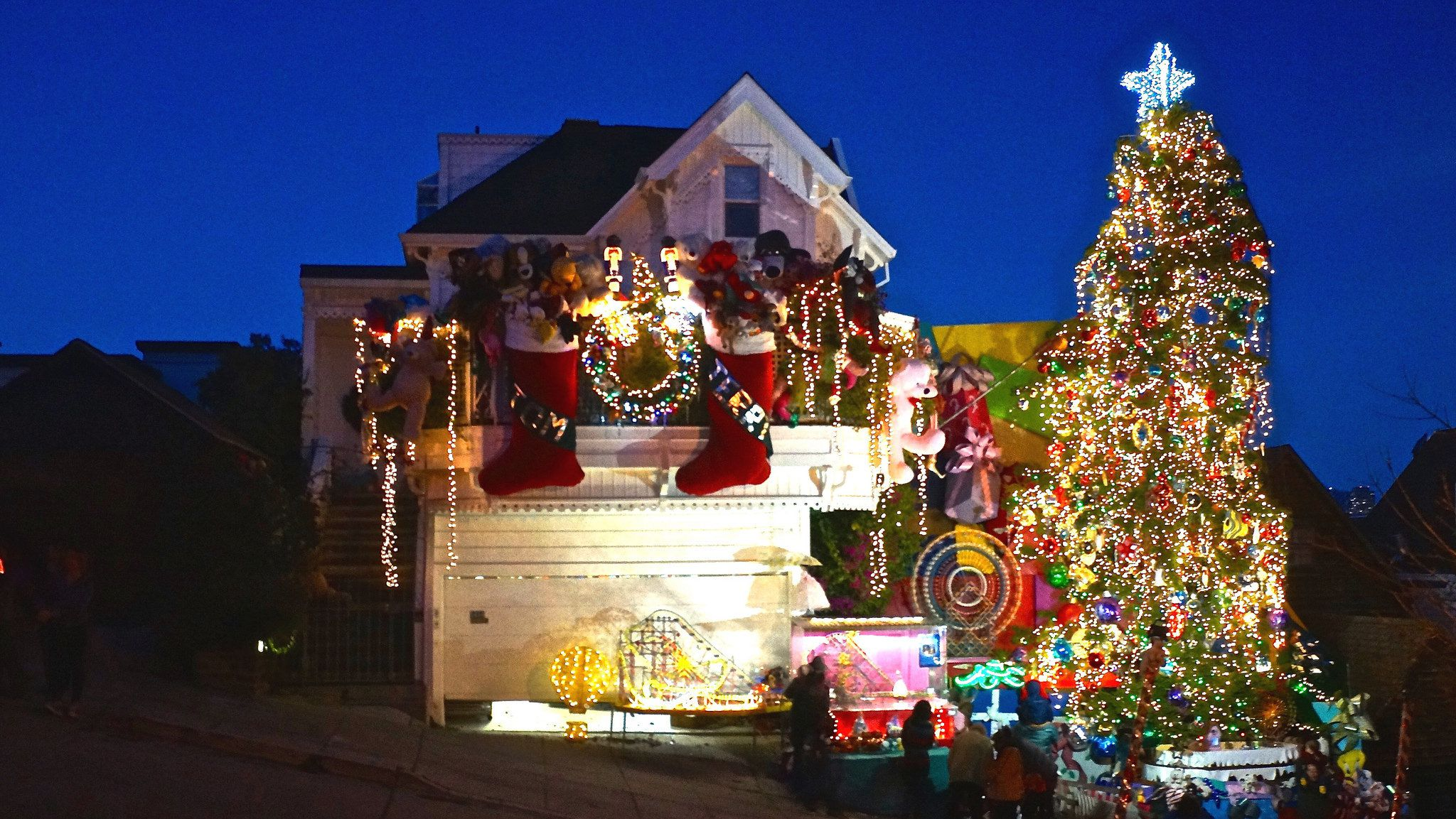 San Francisco Christmas Trees and Holiday Lights